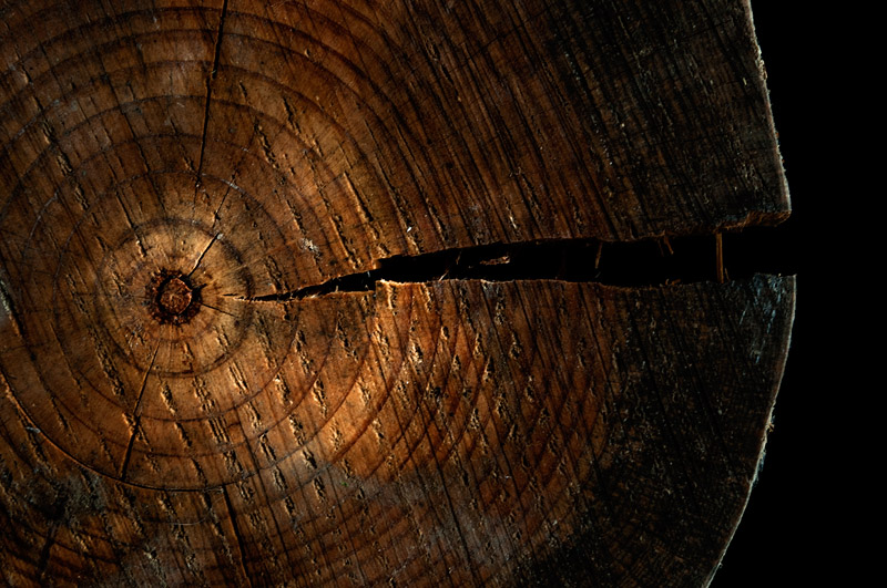 Wood whale – Ballena de madera