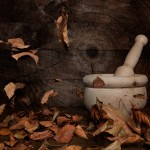 Autumn Wood – Otoño de madera (Photo)